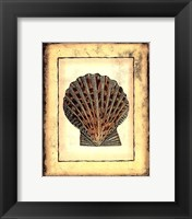 Small Rustic Shell II Framed Print