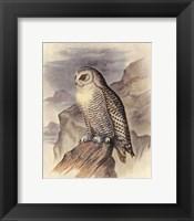 Framed Snowy Owl