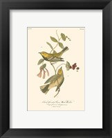 Black-Throated Green Wood Warbler Framed Print