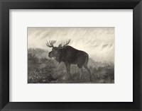 Framed American Moose