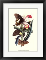Framed Butterflies and Flora I