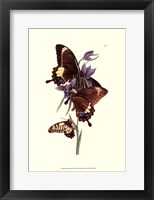 Framed Butterflies and Flora III