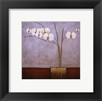 Orchidee I Framed Print