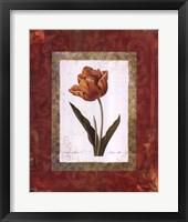 Framed Tulipe Cultivee