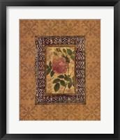Rose Illumination II Framed Print