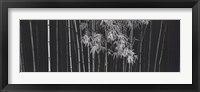 Framed Bamboo - China