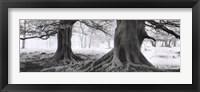 Framed Exmoor - Devon - England
