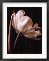 Framed Champagne Tulip I