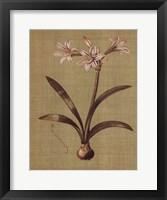 Framed Botanica Verde I