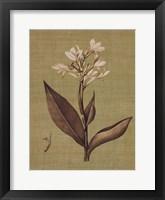 Framed Botanica Verde II
