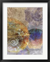 Shell Suite III Framed Print