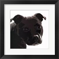 Staffordshire Bull Framed Print