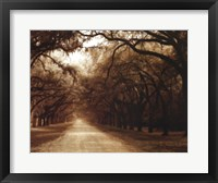 Savannah Oaks I Framed Print