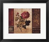 Belle Jardin II Framed Print