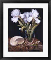 Framed White Iris with Shell