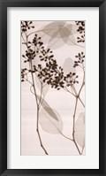 Framed Eucalyptus II