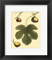 Framed Fig Leaf I
