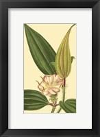 Framed Tropical Ambrosia I