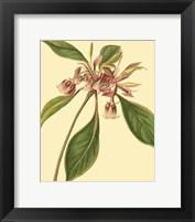 Framed Tropical Ambrosia III