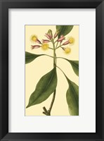 Framed Tropical Ambrosia IV