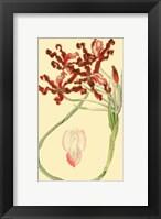 Framed Le Fleur Rouge II