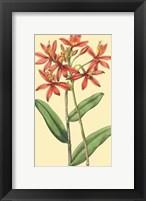 Framed Le Fleur Rouge IV