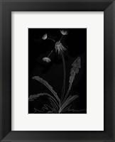 Framed Dandelion Garden I