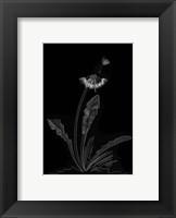 Framed Dandelion Garden II