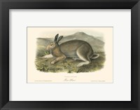 Framed Polar Hare