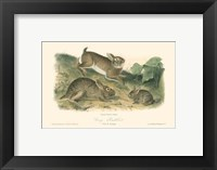 Framed Grey Rabbit
