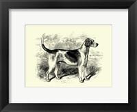 Framed Foxhound