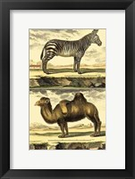 Framed Zebra and Camel