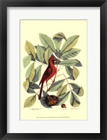 Framed Red Bird and Hiccory Tree