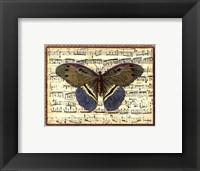 Framed Butterfly Harmony II