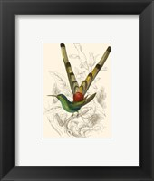 Framed Hummingbird II