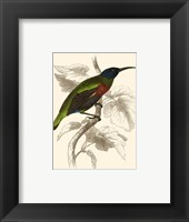 Framed Hummingbird IV