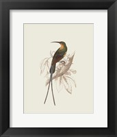 Framed Hummingbird V