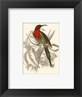 Framed Hummingbird VI