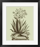 Framed Vintage Aloe I