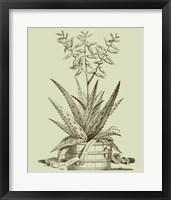Framed Vintage Aloe III