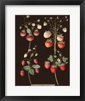 Framed Strawberries