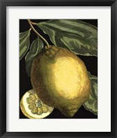 Fragrant Citrus II Framed Print