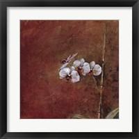 Framed Orchid Series III (Simplicity III)