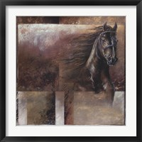 Framed Stallion