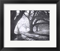 Oak Alley, Light and Shadows Framed Print