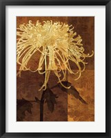 Golden Mums I Framed Print