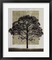 Framed Natures Shapes I