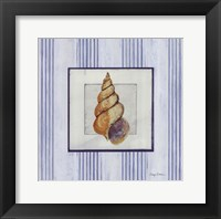 Sanibel Shell II Framed Print