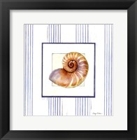 Sanibel Shell III Framed Print