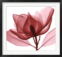 Framed Red Magnolia I